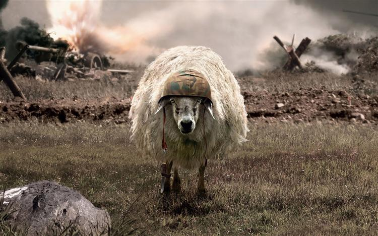 File:Battlesheep2.jpg