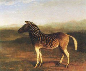 Historical painting of a quagga