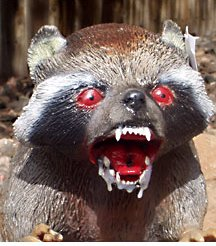 Rabid raccoon.jpg