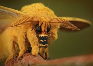 Monster_moth.jpg